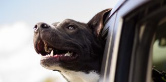 get your pup in on the ride after selling your truck like a pro!